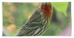 Beach Towel featuring the photograph Male House Finch by Debbie Portwood
