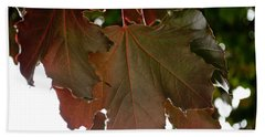 Beach Towel featuring the photograph Maple 2 by Tikvah's Hope