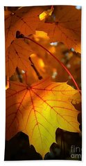 Maple At First Light Beach Towel by Sue Stefanowicz