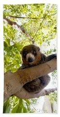 Mongoose Lemur Beach Towel