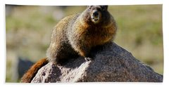 Beach Sheet featuring the photograph Morning Marmot by Colleen Coccia