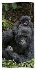 Mountain Gorilla Mother And 1.5yr Old Beach Towel