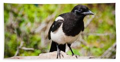 Beach Sheet featuring the photograph Mr. Magpie by Cheryl Baxter