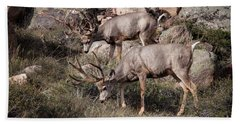 Mule Deer Bucks Beach Towel