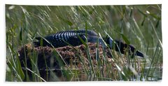 Beach Towel featuring the photograph Nesting Loon by Brent L Ander