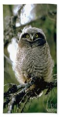 Northern Hawk Owl Fledgeling Beach Towel