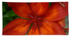 Orange Beauty Beach Sheet by Dolores  Deal