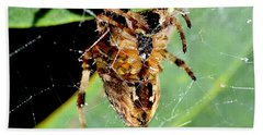 Beach Towel featuring the photograph Orb Weaver Waits by Chriss Pagani