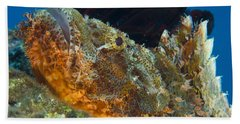 Papuan Scorpionfish Lying On A Reef Beach Towel