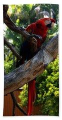 Parrot2 Beach Sheet