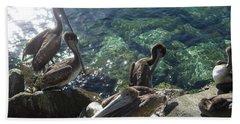 Pelicans Beach Sheet