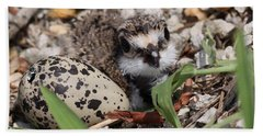 Killdeer Baby - Photo 25 Beach Sheet by Travis Truelove