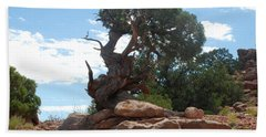 Pine Tree By The Canyon Beach Sheet by Dany Lison