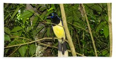 Beach Towel featuring the photograph Plush-crested Jay by David Gleeson