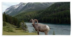 Portrait Of A Bighorn Sheep At Lake Minnewanka  Beach Towel