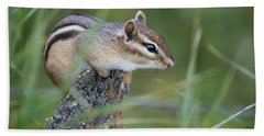 Beach Towel featuring the photograph Portrait Of A Chipmunk by Penny Meyers