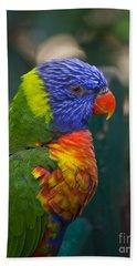 Posing Rainbow Lorikeet. Beach Towel
