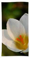 Pretty White Crocus Beach Sheet by JD Grimes