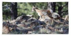 Pronghorn Antelope Fawn Beach Sheet