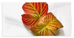 Beach Towel featuring the photograph Raspberry Leaves In Autumn by Sean Griffin