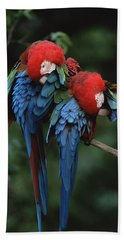 Red And Green Macaw Ara Chloroptera Beach Towel