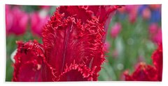 Red Fringed Tulip Flower Macro Art Prints Beach Sheet