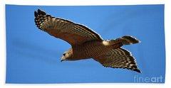 Red Shouldered Hawk In Flight Beach Sheet by Carol Groenen