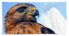 Beach Sheet featuring the photograph Red Shouldered Hawk Portrait by Dan Friend