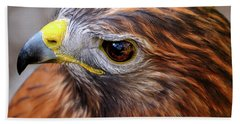 Red-tailed Hawk Close Up Beach Towel