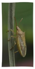 Beach Towel featuring the photograph Rice Stink Bug by Daniel Reed