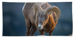 Rocky Mountain Big Horn Ram Beach Towel