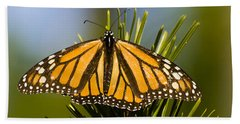 Single Monarch Butterfly Beach Towel by Darcy Michaelchuk