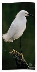 Beach Sheet featuring the photograph Snowy Egret Portrait by Doug Herr