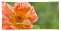 Soft Orange Rose Beach Towel