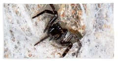 Beach Towel featuring the photograph Spiders Trap by Chriss Pagani