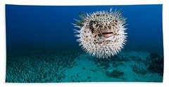 Spotted Porcupinefish II Beach Towel