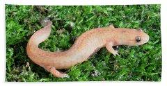 Spring Salamander Beach Sheet by Ted Kinsman