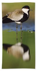Spur Winged Plover With Its Reflection Beach Towel