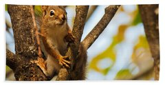 Beach Sheet featuring the photograph Squirrel On High by Cheryl Baxter