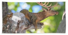 Beach Towel featuring the photograph Squirrelk by Shane Bechler