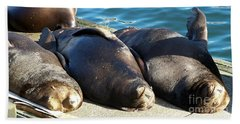 Beach Sheet featuring the photograph Sunbathing Sea Lions by Chalet Roome-Rigdon