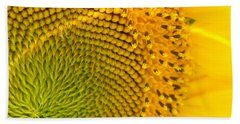 Sunflower Study 1 Beach Towel