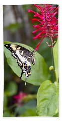 Swallowtail Butterfly Beach Towel