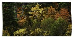 The Boldness Of Autumn Beach Towel by Diane Schuster