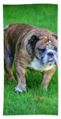 Beach Sheet featuring the photograph The Bulldog Shuffle by Jeanette C Landstrom