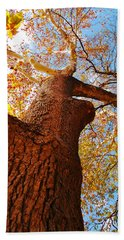 Beach Towel featuring the photograph The Deer  Autumn Leaves Tree by Peggy Franz