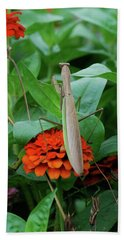 Beach Towel featuring the photograph The Patience Of A Mantis by Thomas Woolworth