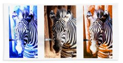 Beach Towel featuring the photograph The Three Zebras White Borders by Rebecca Margraf