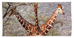 Three Headed Giraffe Beach Sheet