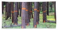 Timber Marking Beach Sheet